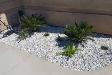 Front Yard Landscape Completion - 3