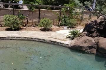Pool Renovation - 33